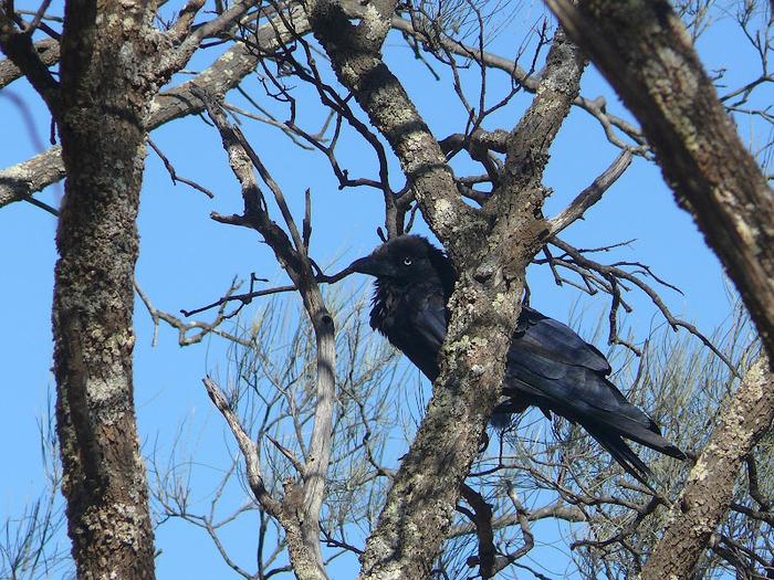 Национальный Парк Манго - Mungo National Park 42976