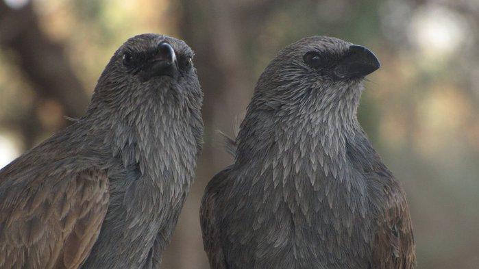 Национальный Парк Манго - Mungo National Park 25328
