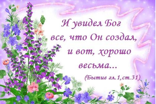 1245607023_0lik.ru_polevye-cvety1 (502x334, 75Kb)