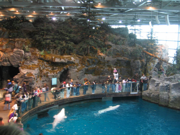 аквариум2 (600x450, 62Kb)