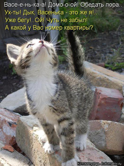 kotomatritsa_FE (524x700, 78Kb)