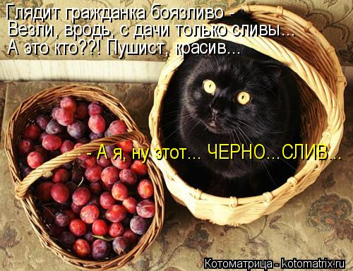 kotomatritsa_i7 (500x384, 56Kb)
