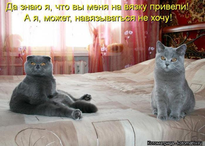 kotomatritsa_Lz (700x499, 59Kb)