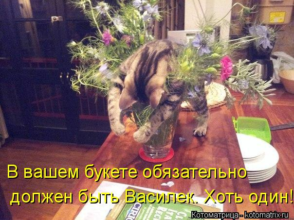 kotomatritsa_OD (604x453, 69Kb)