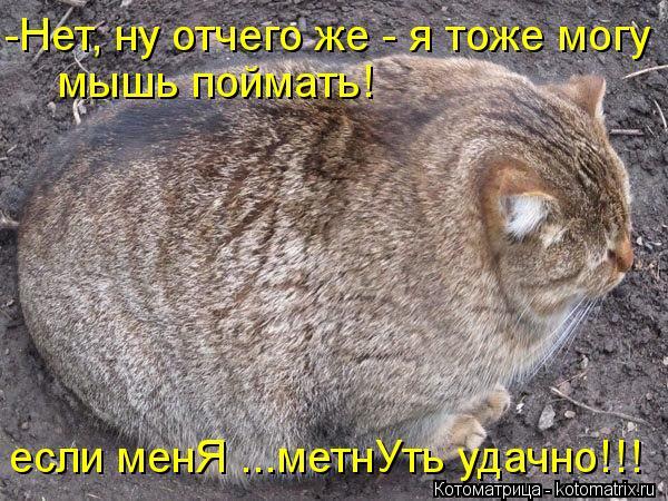 kotomatritsa_u8 (600x450, 88Kb)