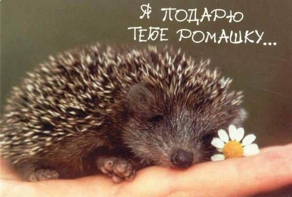 ромашки открытки: