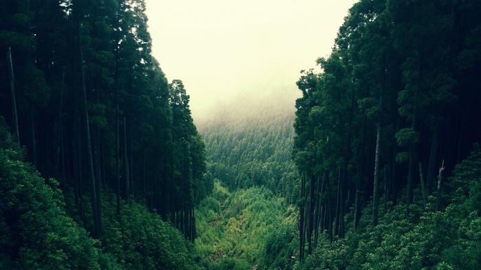 Густой лес,картинки лес (700x393, 102Kb)