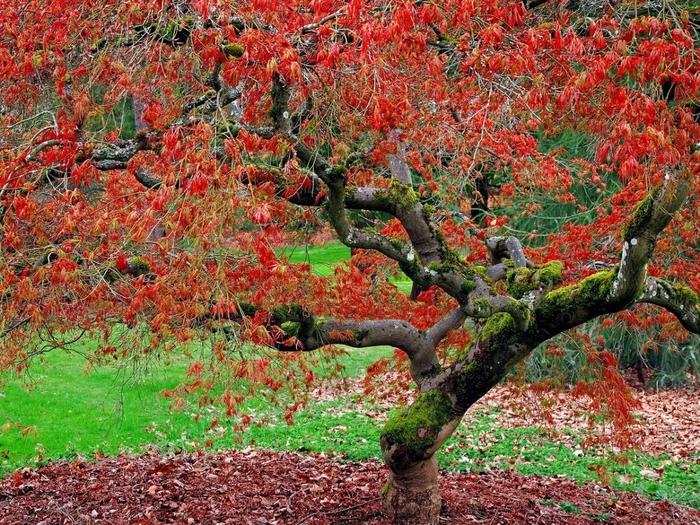 Липа осенью фото