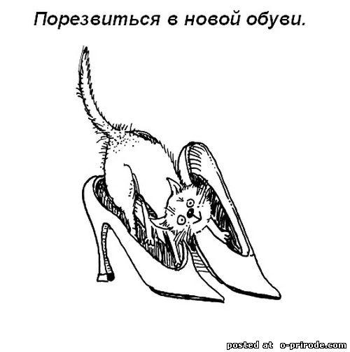 Kot_umet_15 (500x502, 30Kb)