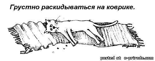 Kot_umet_18 (500x199, 25Kb)