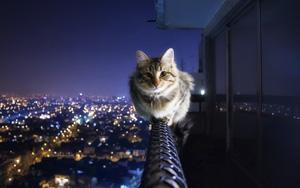 кошка-обр (300x188, 20Kb)