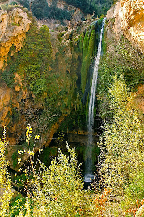 Природный парк Сан Мигель дель Фай. 50999