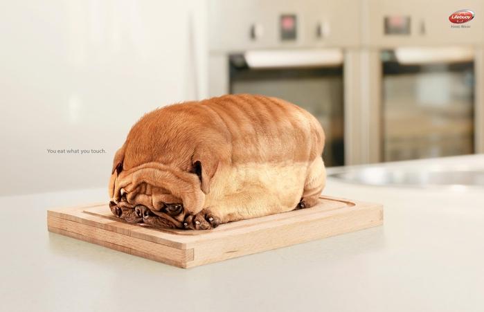 eatdog (700x451, 159Kb)