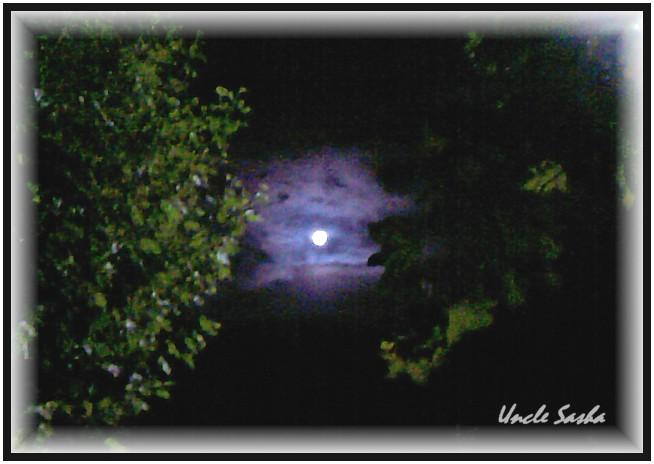 foto-0047.10.12.1 (654x464, 62Kb)