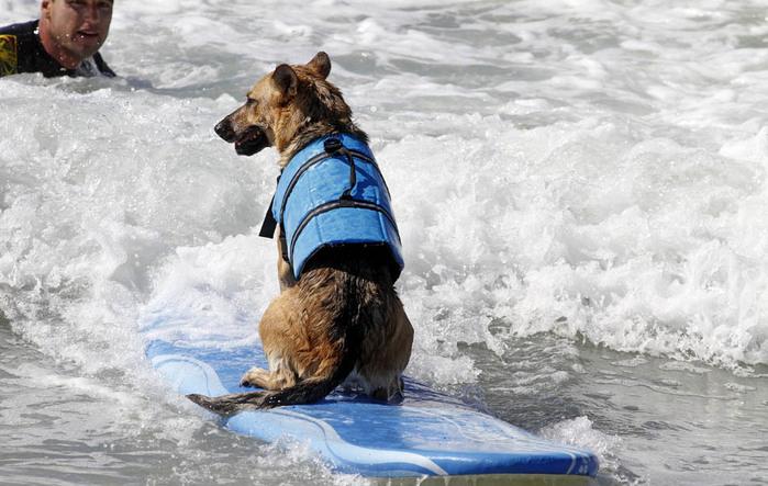 dogssurfing-8 (700x443, 113Kb)