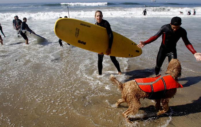 dogssurfing-10 (700x443, 139Kb)