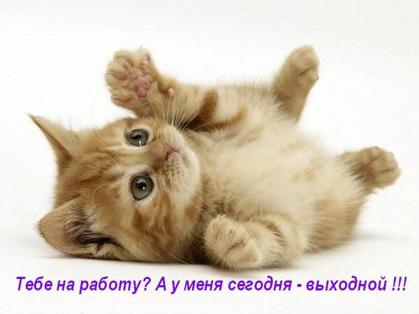 137320_800_6001 (600x450, 53Kb)