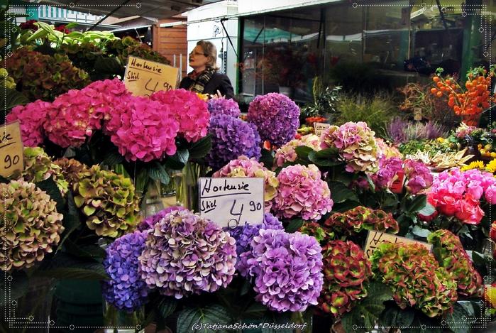 Городской рынок Карлсплатц в Дюссельдорфе