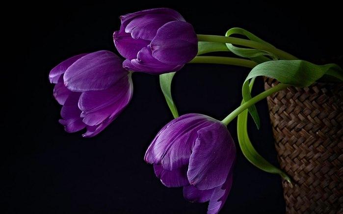 """Схемы вышивки  """"тюльпаны """".  Авторы.  Марка нитей.  Вышивка крестом. тюльпаны. цветы.  Laknay.  Теги.  Гамма, 30 цветов."""