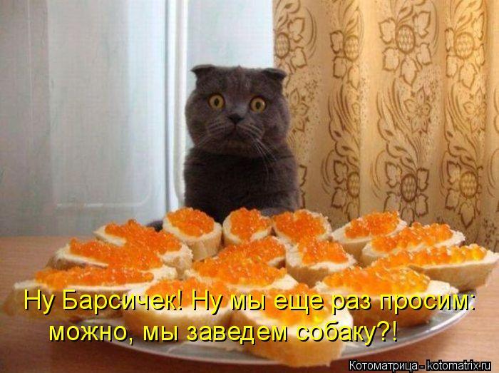 kotomatritsa_Dy (700x523, 64Kb)
