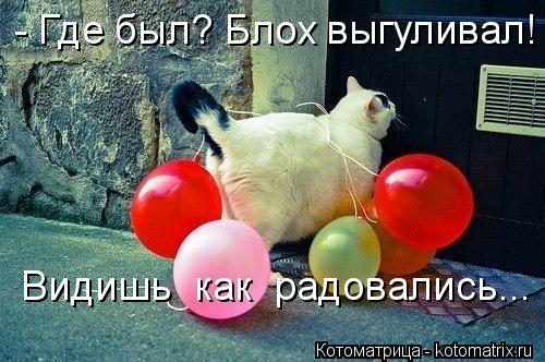 kotomatritsa_C (500x332, 52Kb)