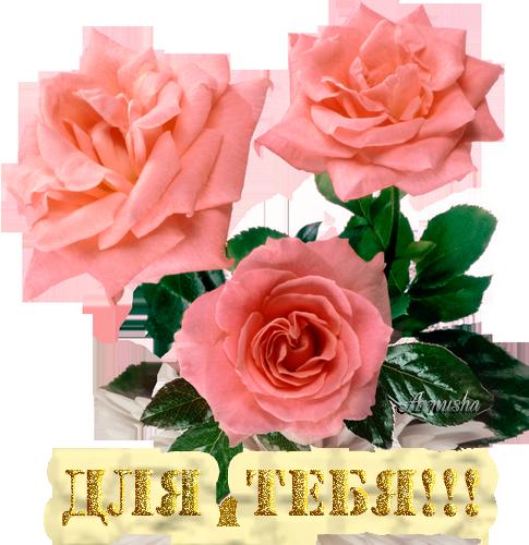 Для тебя-розы (485x500, 366Kb)
