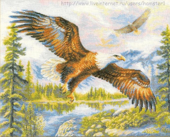 1471 - В свободном полете (692x557, 240Kb)