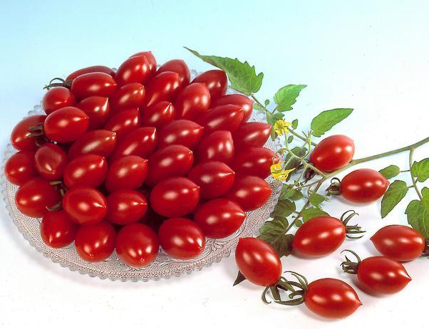 2627134_121404747_1427219577_aas_05_Tomato_Sugary_lg (602x462, 45Kb)