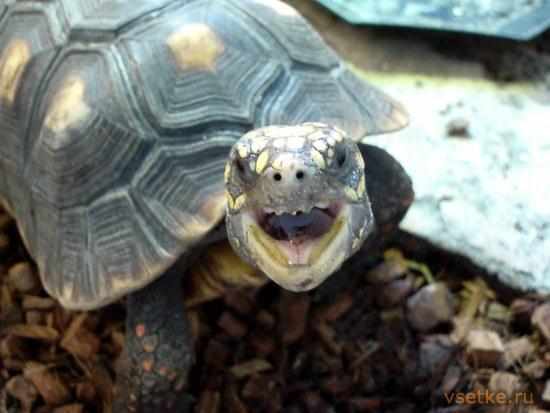 Условия ухода за морскими черепахами в домашних условиях