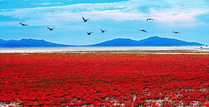 красный пляж китай фото 2 (700x357, 319Kb)