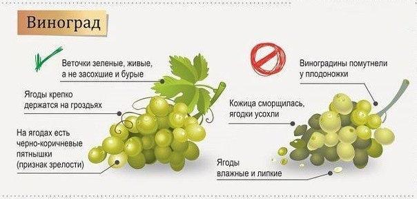 Правильно выбираем фрукты и ягоды6 (604x288, 123Kb)