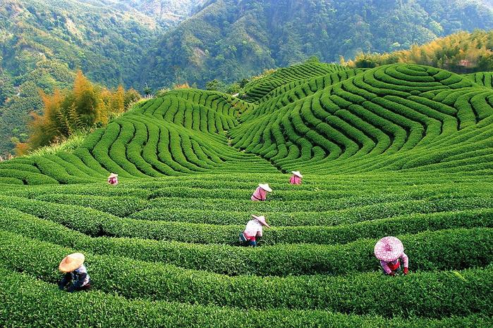 чай 2 (700x466, 605Kb)
