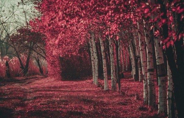 Притча о дереве (604x387, 90Kb)