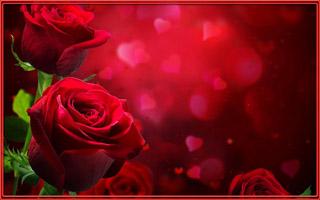 rozy-bordovyy-cvety-foto (320x200, 34Kb)
