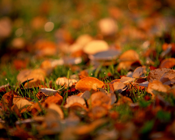 21_autumn_foto (700x560, 158Kb)