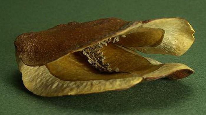 ЖАКАРАНДА - дерево 27 (700x392, 190Kb)