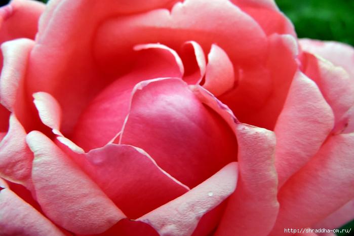ботанический сад 2015 (85) (700x466, 199Kb)