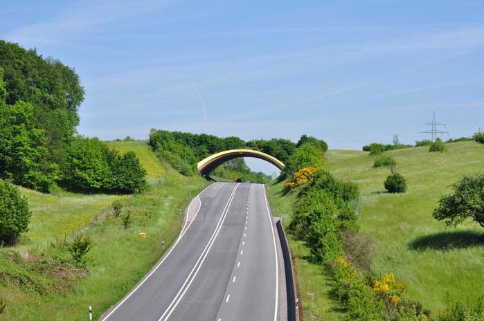мосты для животных 1 (700x464, 301Kb)