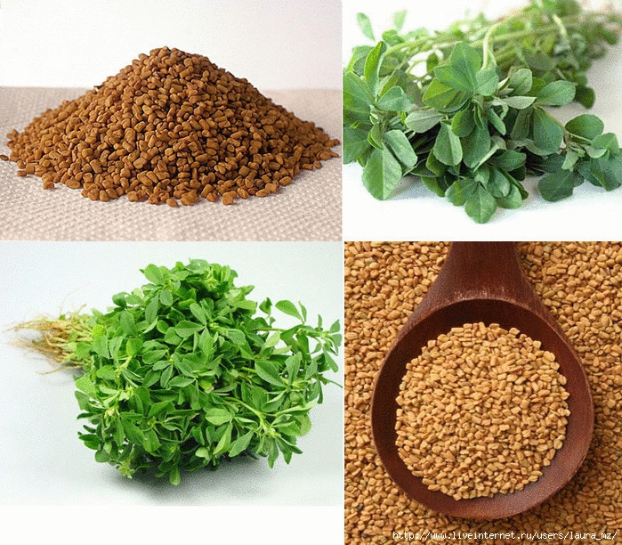 content_fenugreek_-_medicine_for_a_hundred_diseases__econet_ru (700x612, 411Kb)