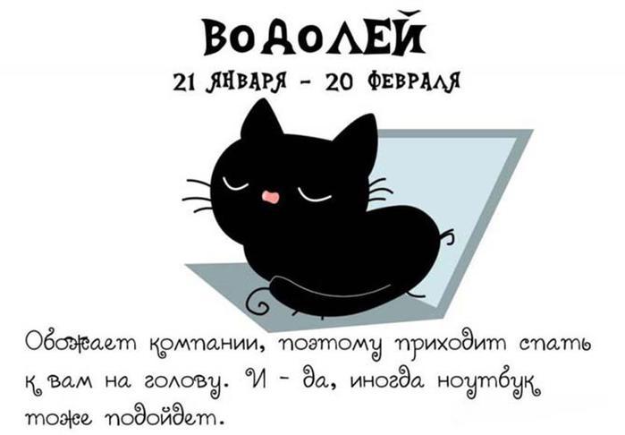 Правильный Кошачий Зодиак для хорошего настроения на весь день