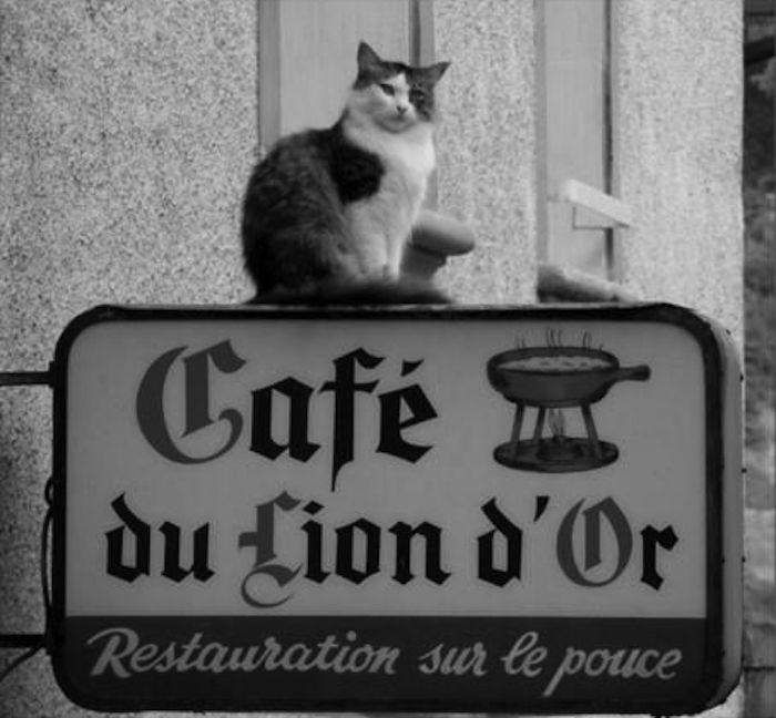 chats-cafe-lion-paris (700x648, 57Kb)
