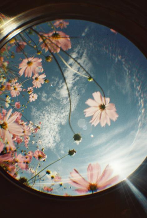 flower-hipster-indie-love-Favim.com-1888914 (472x700, 516Kb)