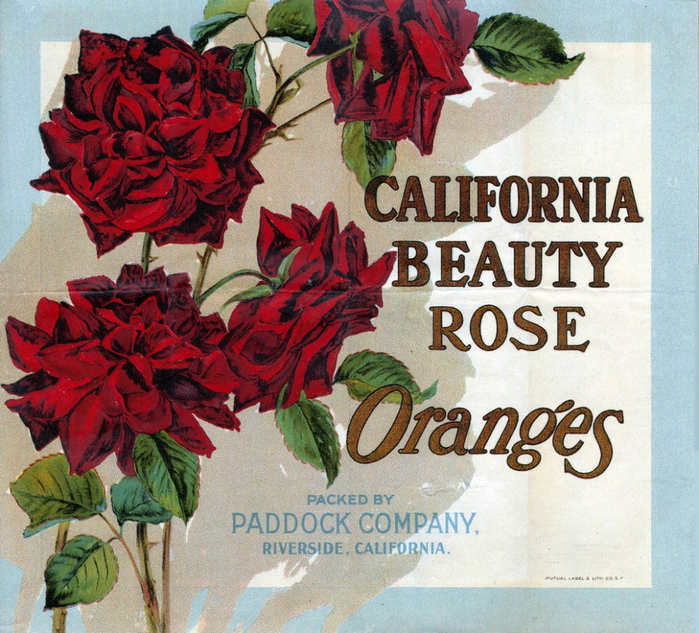 California Beauty Rose Oranges (700x633, 575Kb)