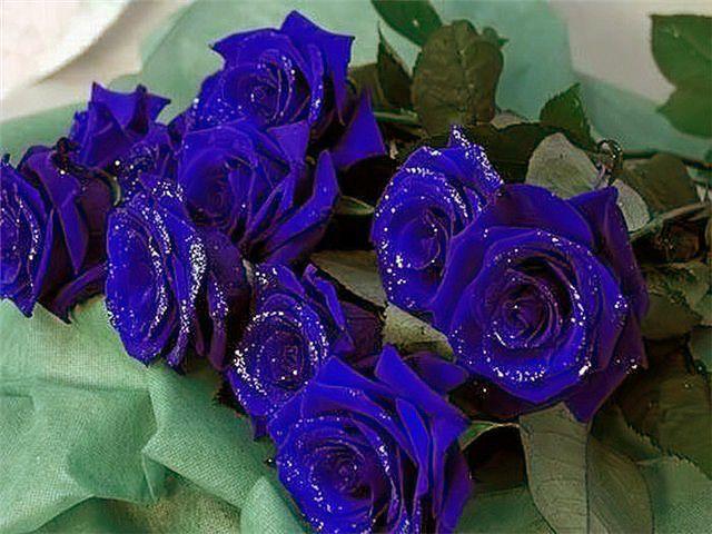 розы (640x480, 63Kb)