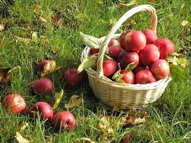 яблоки (380x285, 87Kb)