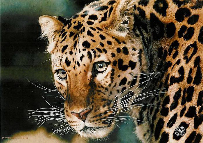animal_artist_20 (699x494, 412Kb)