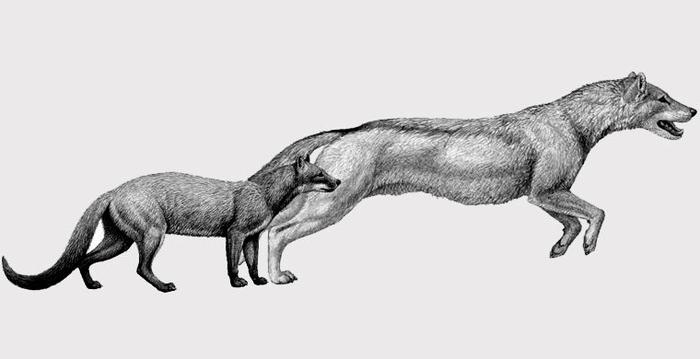 собаки (700x359, 63Kb)