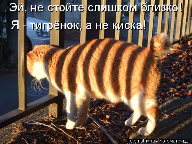 kotomatritsa_1 (640x480, 332Kb)