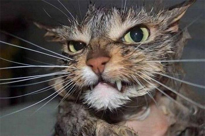 мокрые коты (700x463, 278Kb)