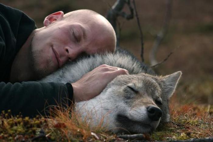 дикие волки фото 4 (700x466, 228Kb)